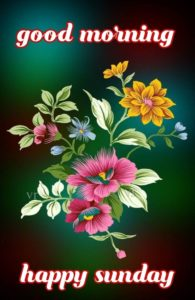 Flower Sunday Good Morning Pictures HD