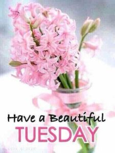 Beautiful Tuesday Good Morning Image Photos