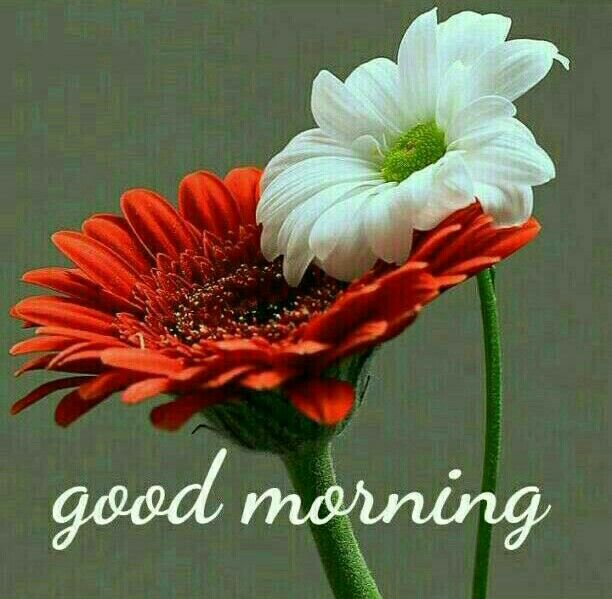 100+ Sweet Gud Mrng Images in Hindi and English for Whatsapp