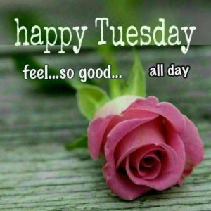 191+ Good Morning Tuesday Images Wishes Photos and Wallpaper