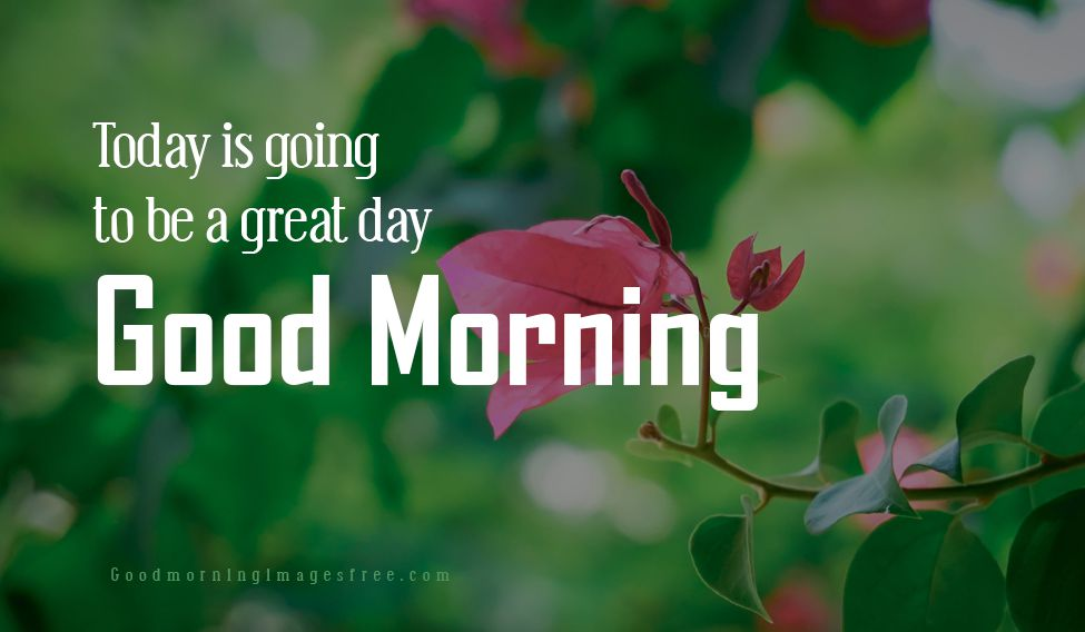 Whatsapp Good Morning Great Day Images Wishes with Quotes