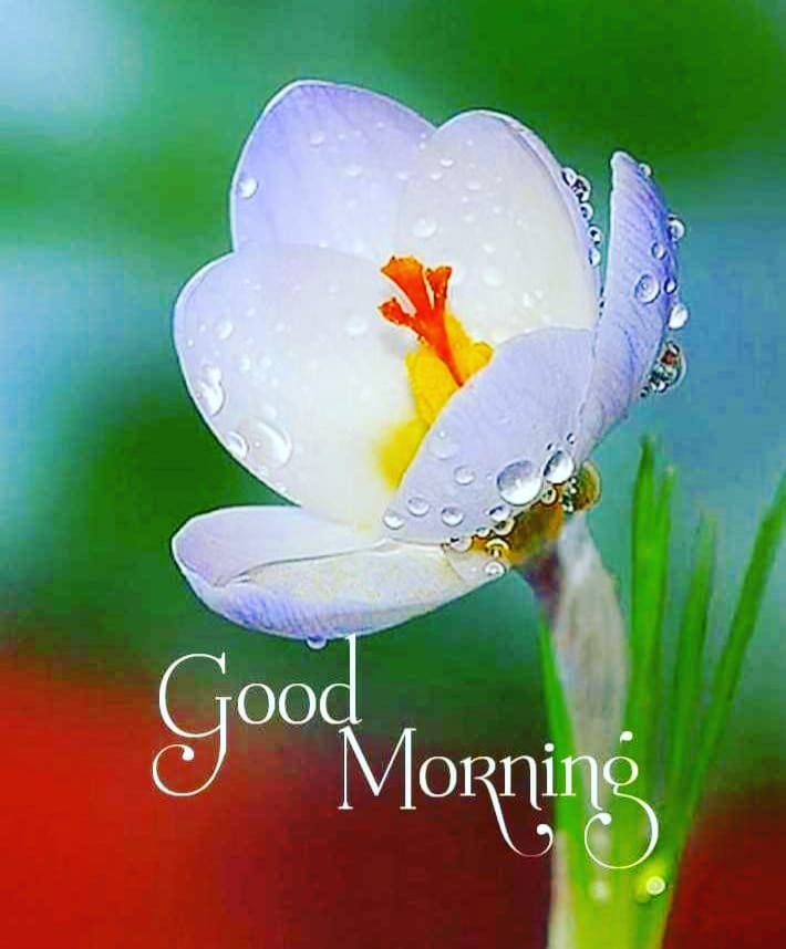 Photos Of Flower Good Morning Images for Whatsapp