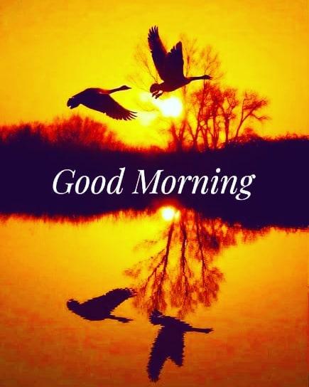 Sunrise Good Morning Wishes with Birds